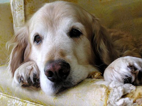 Egy kutya elvesztésének meggyászolása